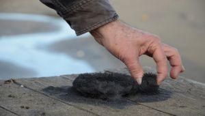 Bioenerjiyi düzenleyen mucizevi kum